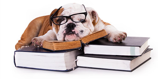 Dog lying on books - Driving with Dogs