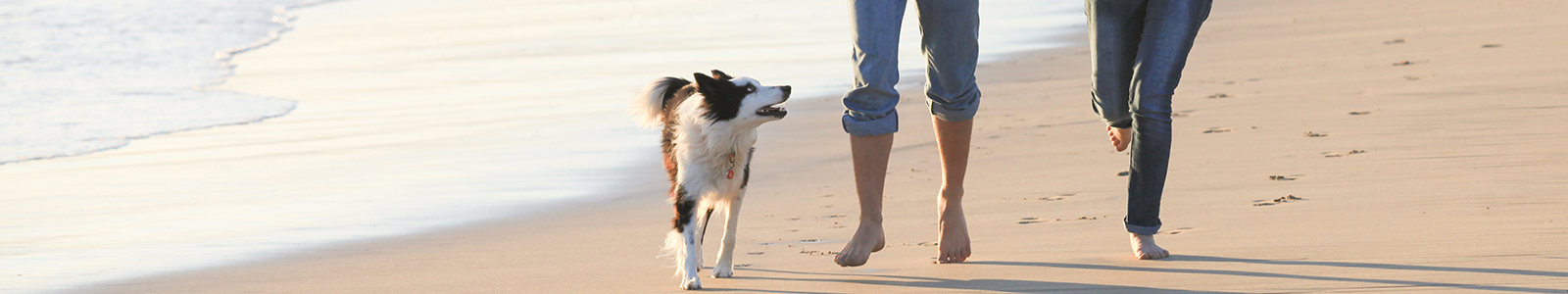 Find the perfect dog walk on your journey - Driving with Dogs