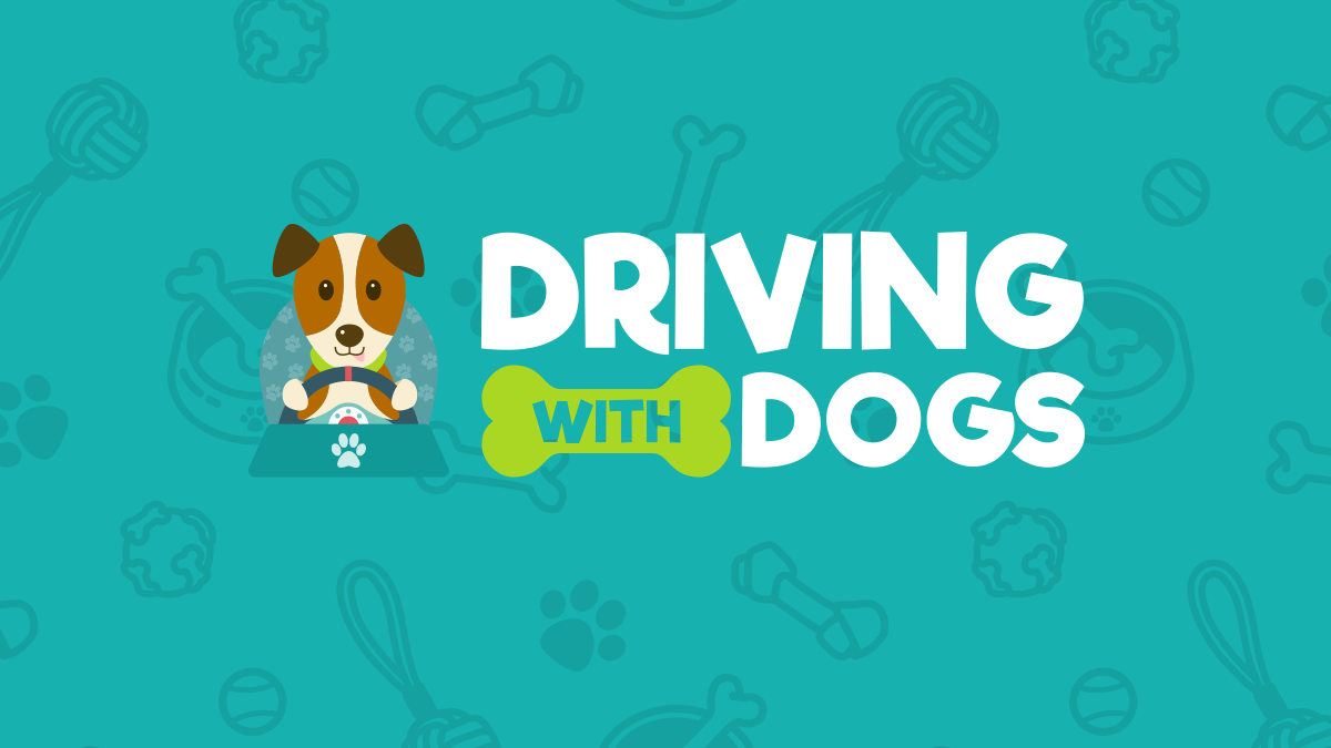 (c) Drivingwithdogs.co.uk